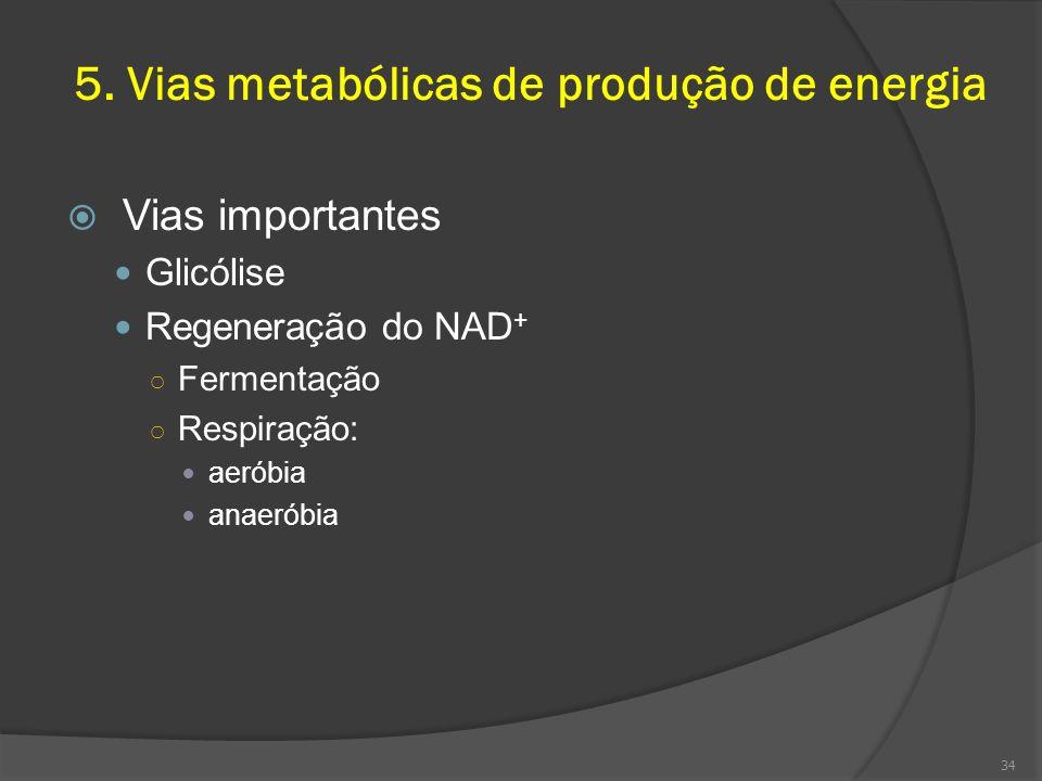 5. Vias metabólicas de produção de energia