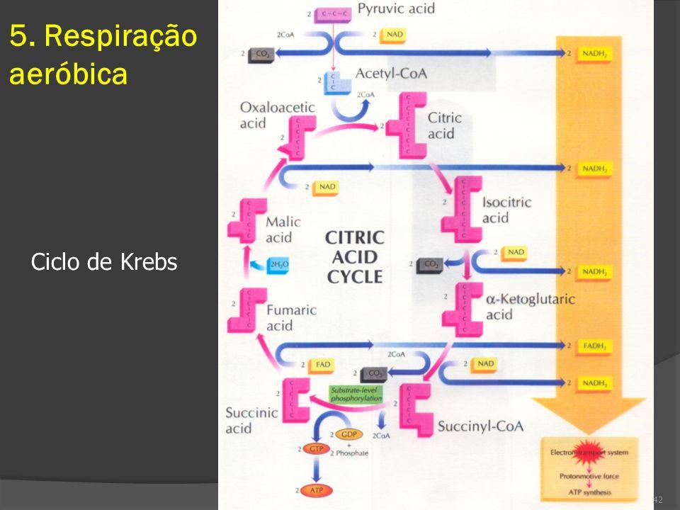 5. Respiração aeróbica Ciclo de Krebs