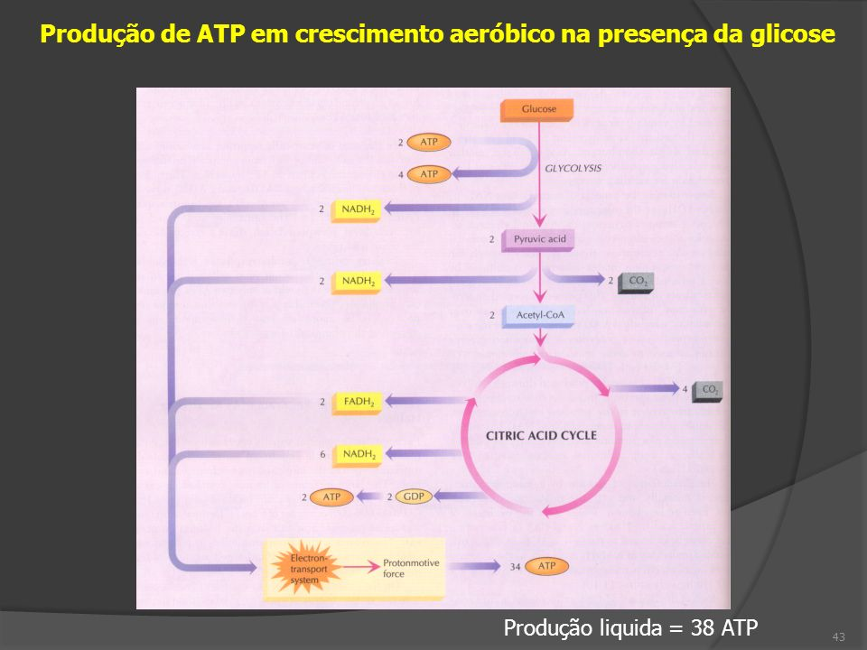 Produção de ATP em crescimento aeróbico na presença da glicose