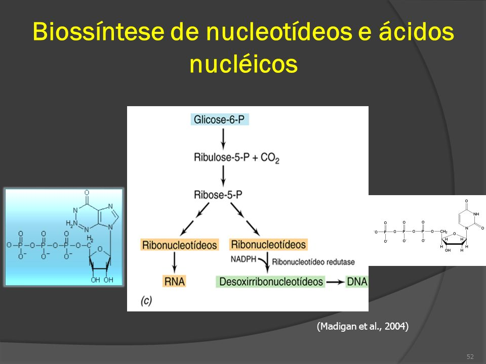 Biossíntese de nucleotídeos e ácidos nucléicos