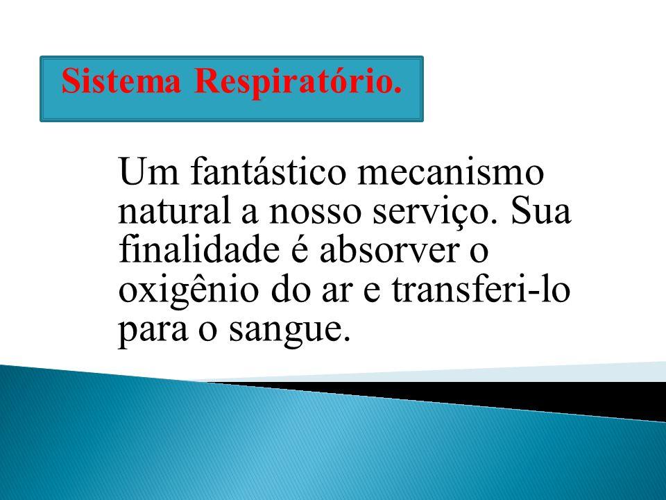 Sistema Respiratório. Um fantástico mecanismo natural a nosso serviço.