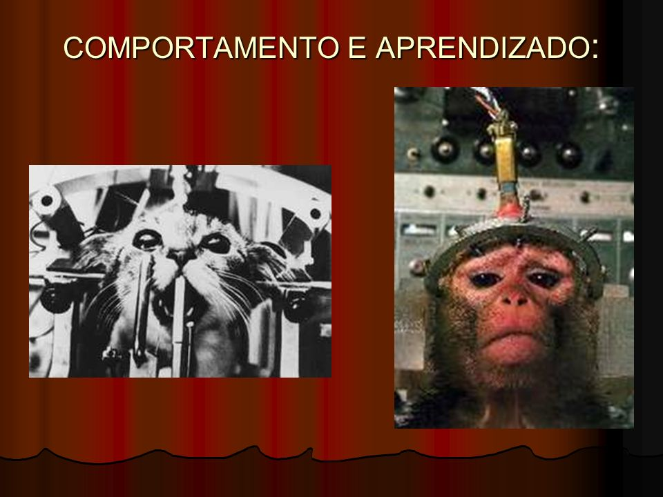 COMPORTAMENTO E APRENDIZADO: