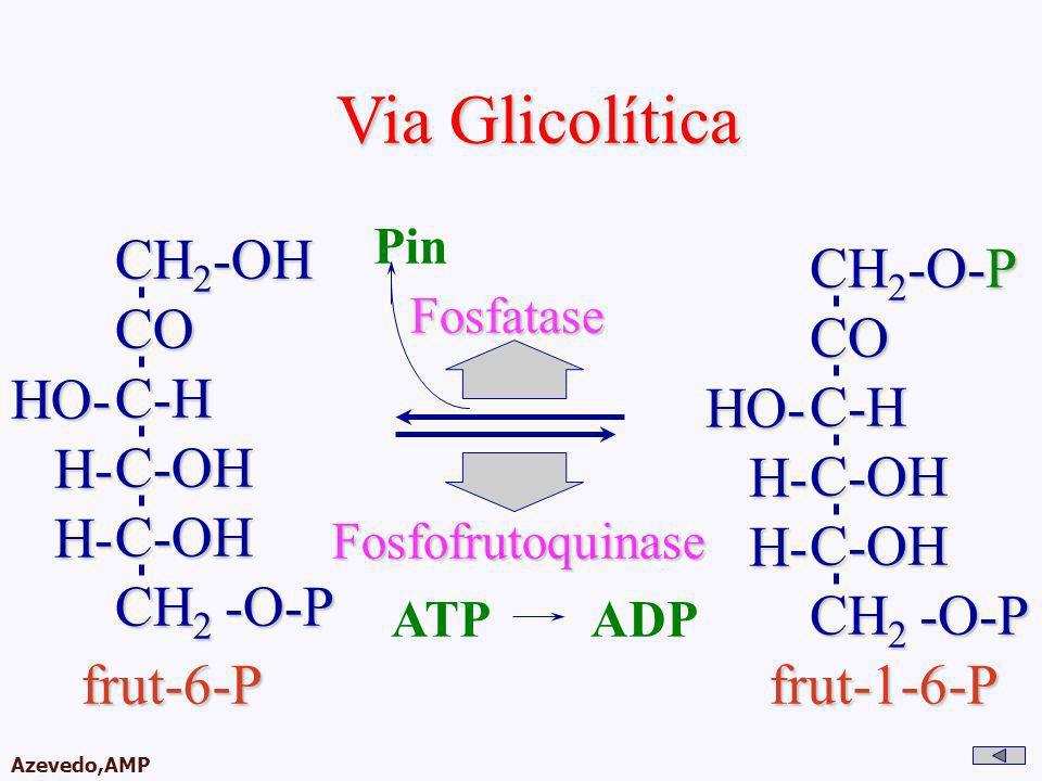 Via Glicolítica CH2-OH CH2-O-P CO CO C-H C-H C-OH C-OH HO- HO- H-