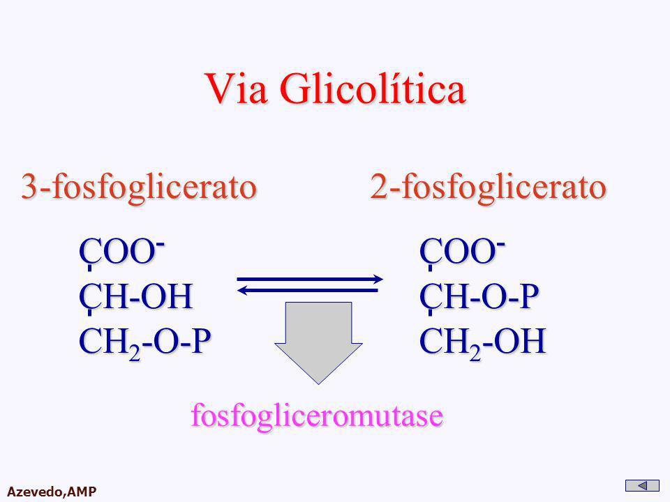 Via Glicolítica 3-fosfoglicerato 2-fosfoglicerato COO- CH-OH CH2-O-P