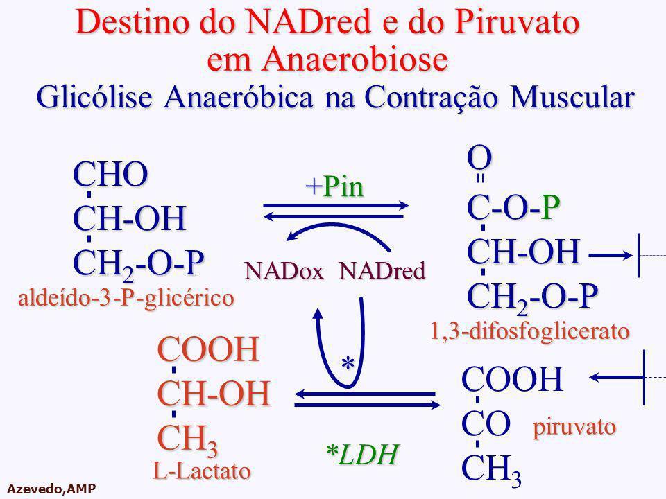 Destino do NADred e do Piruvato em Anaerobiose