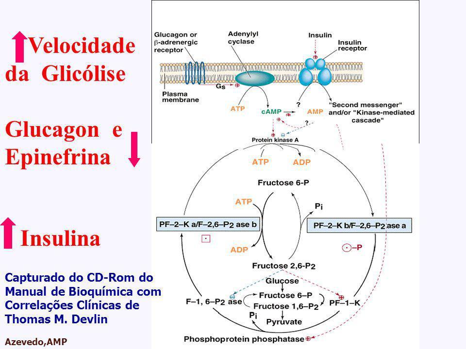 Velocidade da Glicólise