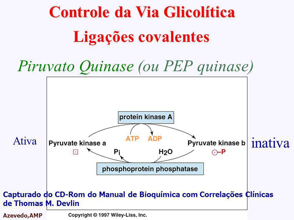 Controle da Via Glicolítica
