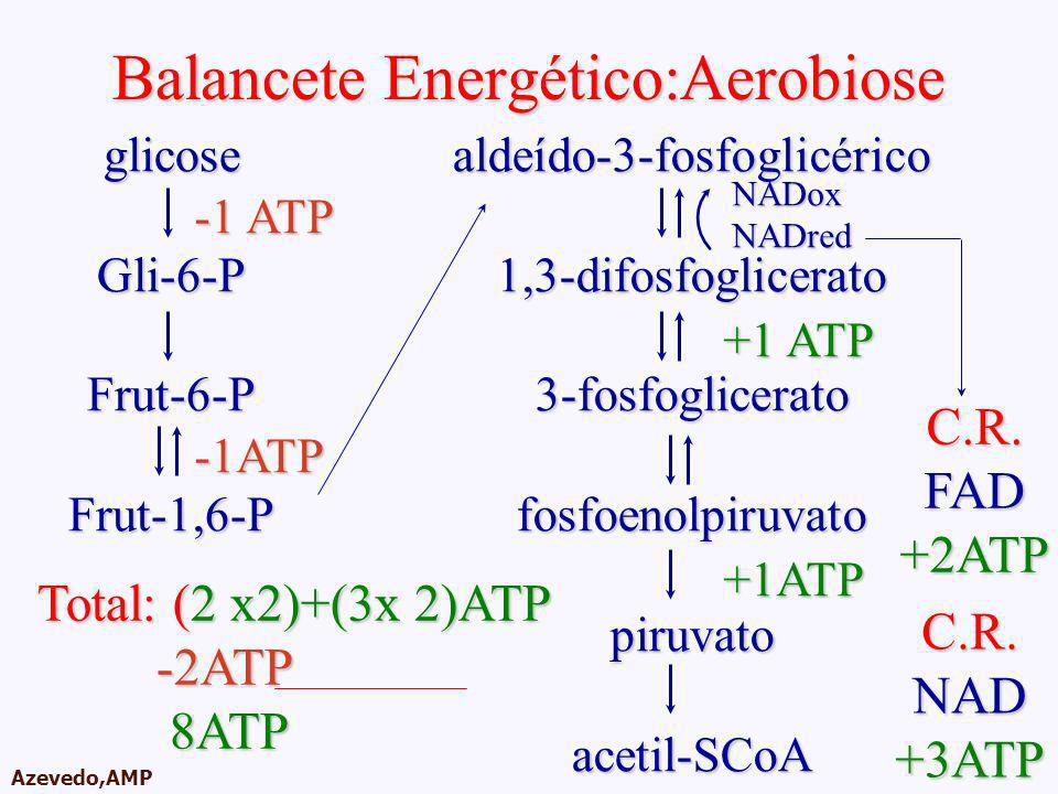 Balancete Energético:Aerobiose
