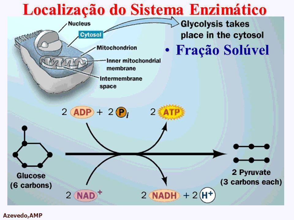Localização do Sistema Enzimático