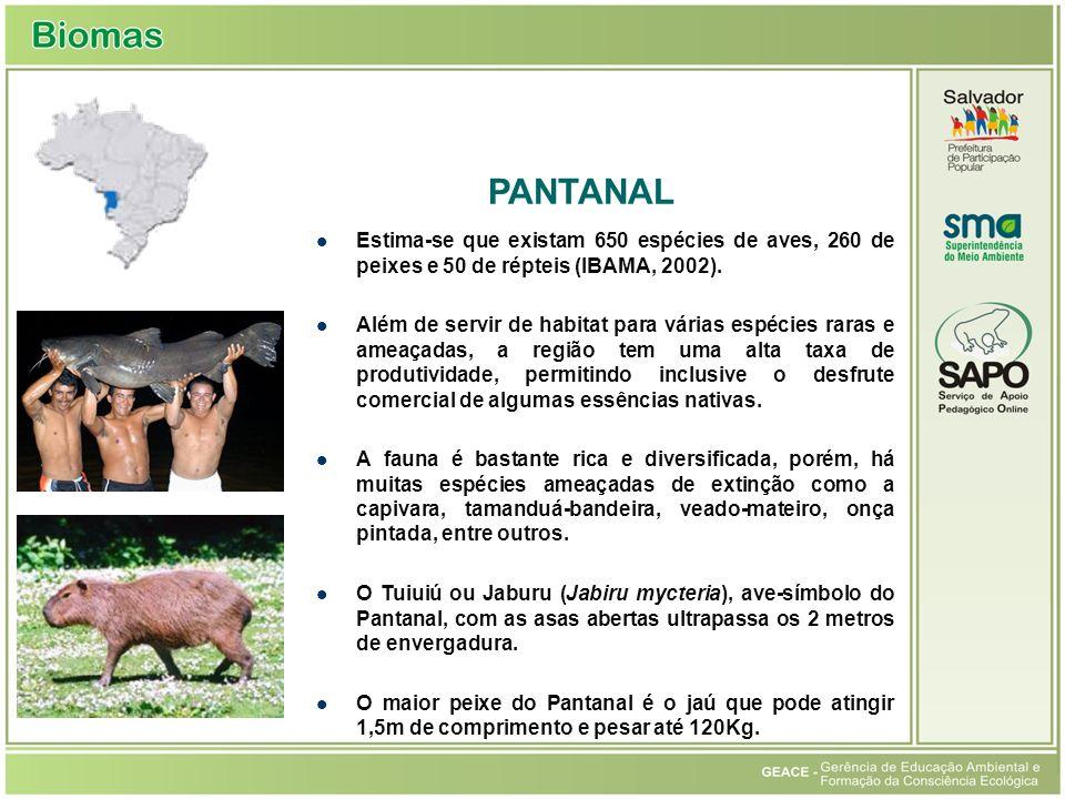 Pantanal PANTANAL. Estima-se que existam 650 espécies de aves, 260 de peixes e 50 de répteis (IBAMA, 2002).