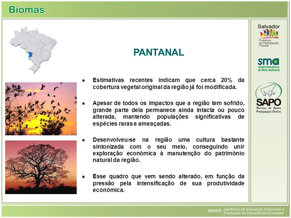 Pantanal PANTANAL. Estimativas recentes indicam que cerca 20% da cobertura vegetal original da região já foi modificada.