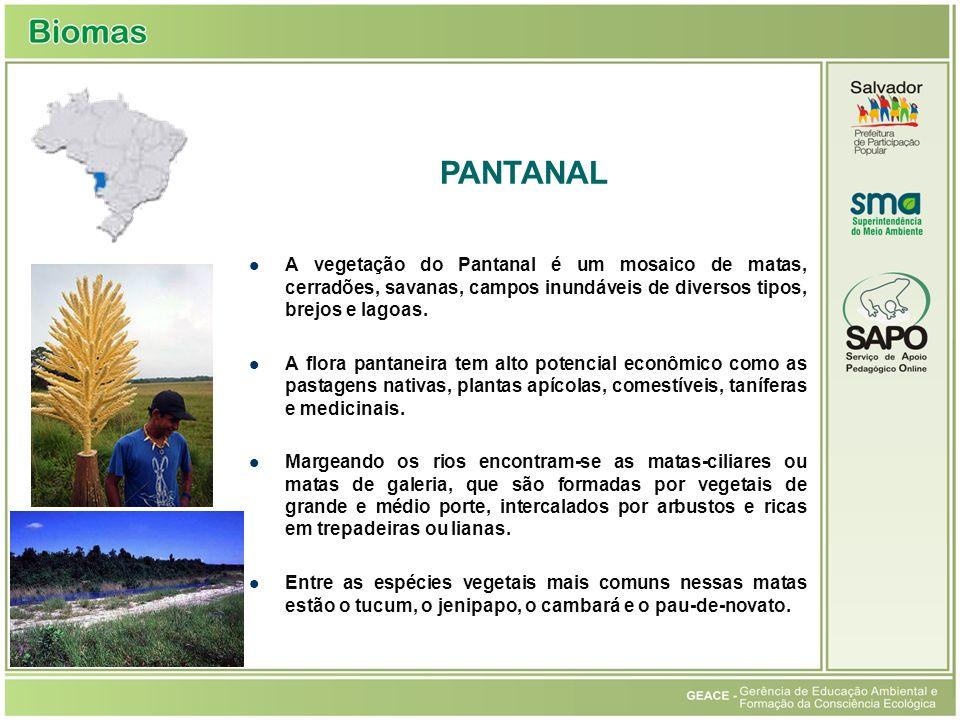 Pantanal PANTANAL. A vegetação do Pantanal é um mosaico de matas, cerradões, savanas, campos inundáveis de diversos tipos, brejos e lagoas.
