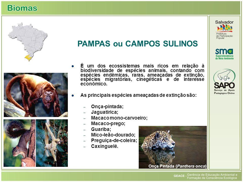 Pampas ou Campos Sulinos