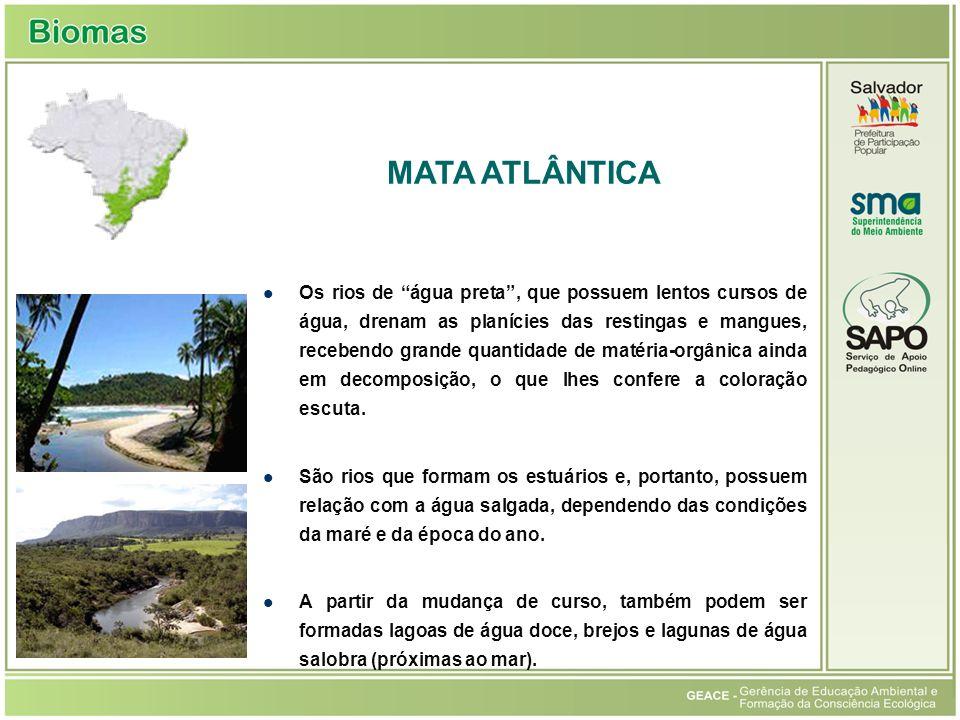 Mata Atlântica MATA ATLÂNTICA
