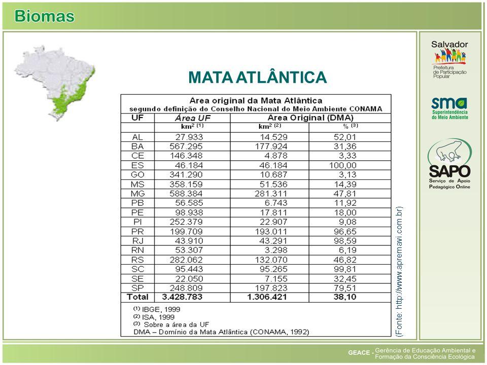 Mata Atlântica MATA ATLÂNTICA (Fonte: http://www.apremavi.com.br)