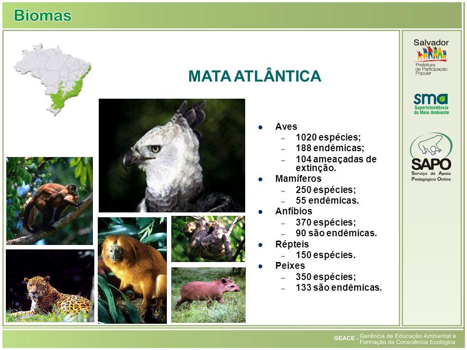 Mata Atlântica MATA ATLÂNTICA Aves 1020 espécies; 188 endêmicas;