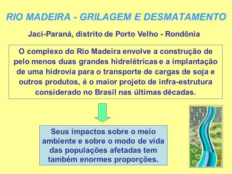 RIO MADEIRA - GRILAGEM E DESMATAMENTO