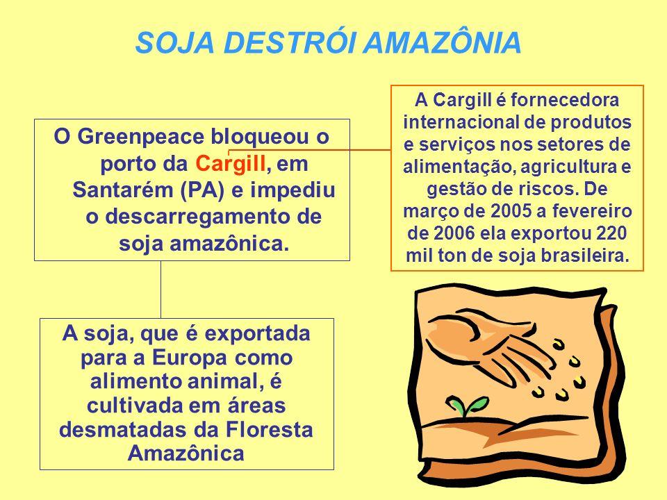 SOJA DESTRÓI AMAZÔNIA