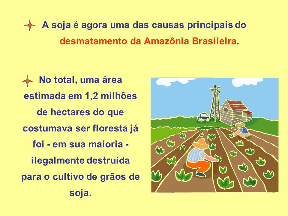 A soja é agora uma das causas principais do desmatamento da Amazônia Brasileira.
