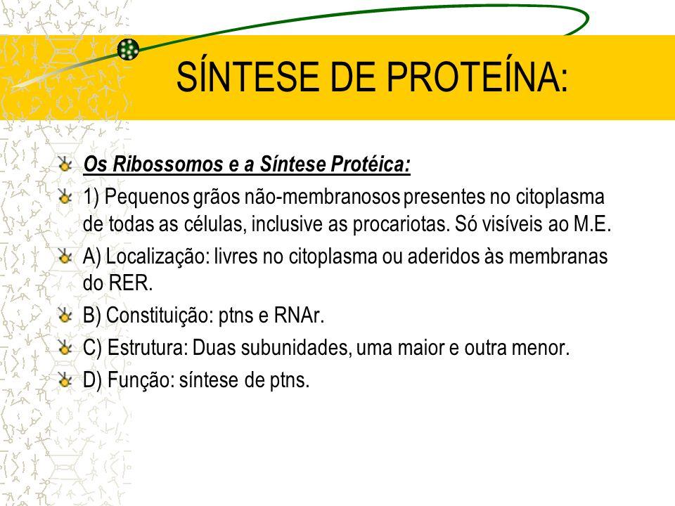 SÍNTESE DE PROTEÍNA: Os Ribossomos e a Síntese Protéica: