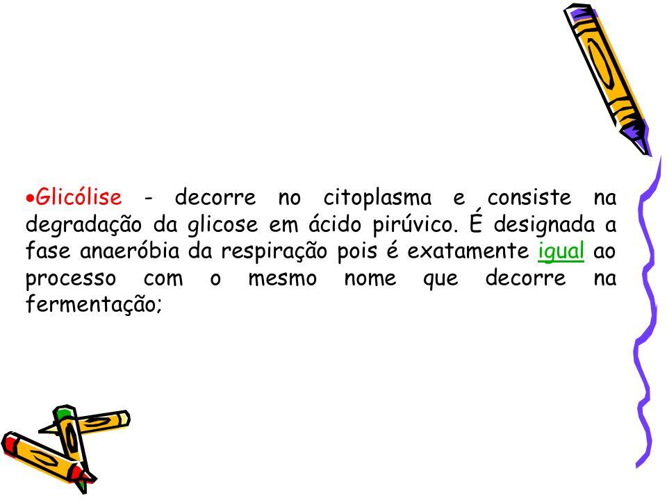 Glicólise - decorre no citoplasma e consiste na degradação da glicose em ácido pirúvico.
