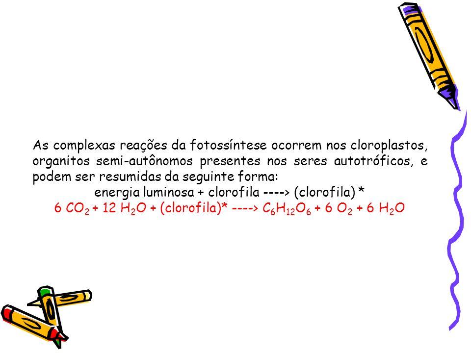 energia luminosa + clorofila ----> (clorofila) *