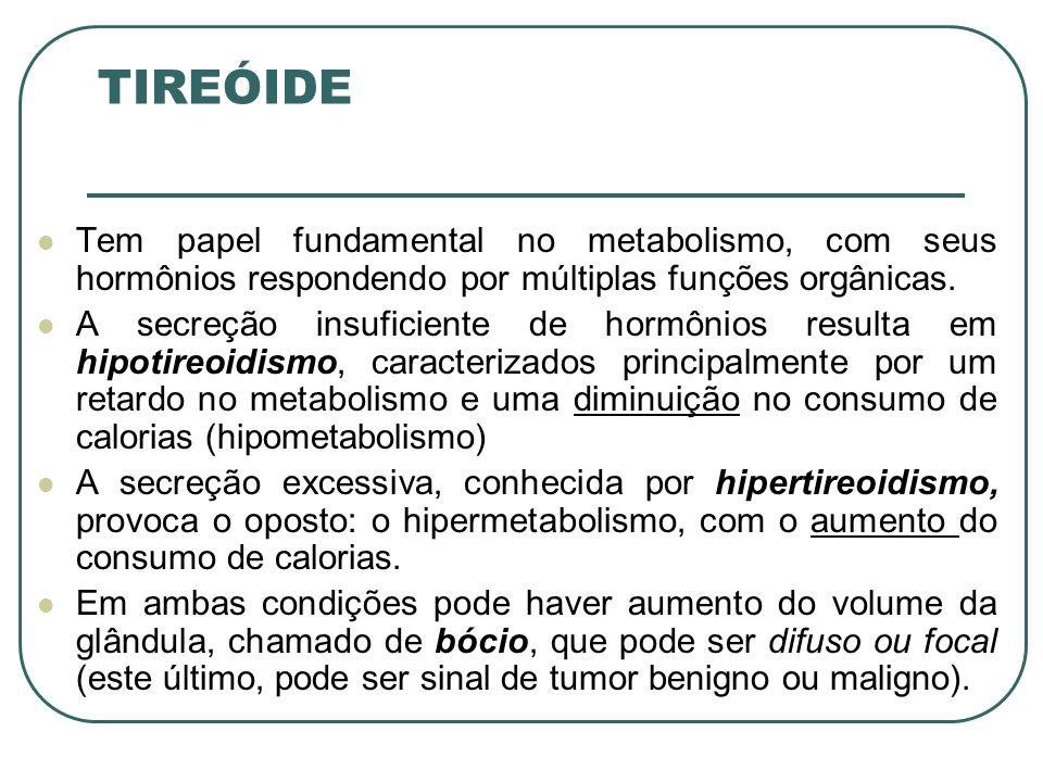 TIREÓIDE Tem papel fundamental no metabolismo, com seus hormônios respondendo por múltiplas funções orgânicas.