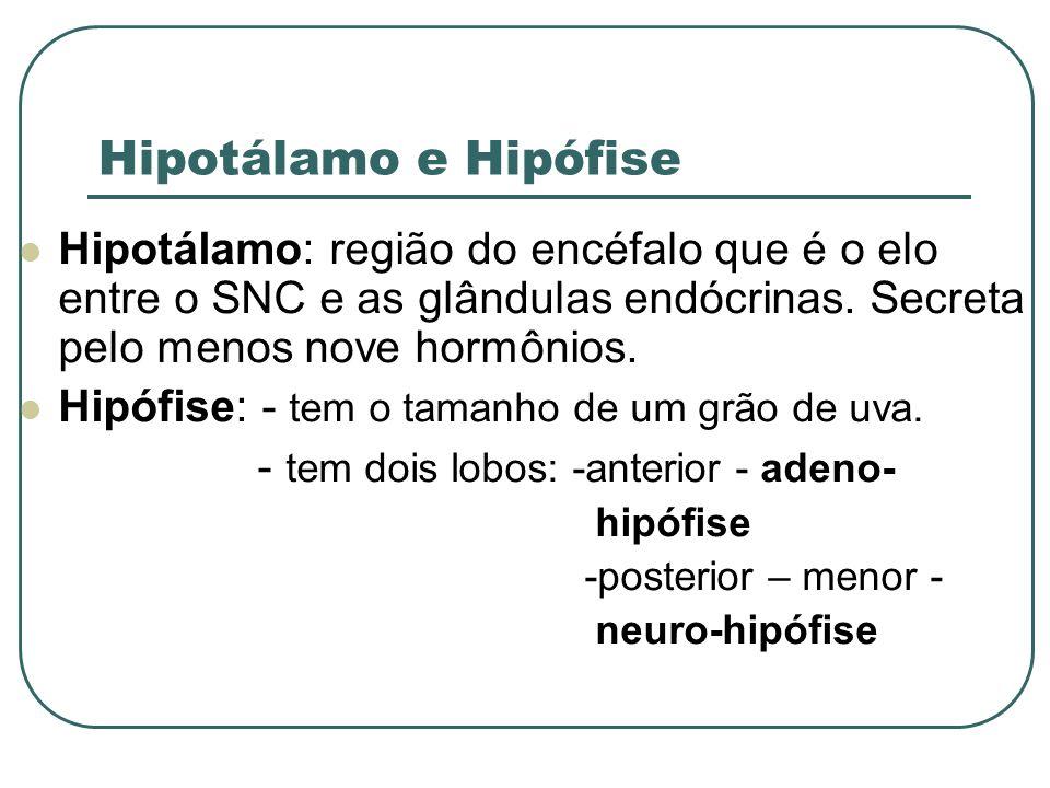 Hipotálamo e Hipófise Hipotálamo: região do encéfalo que é o elo entre o SNC e as glândulas endócrinas. Secreta pelo menos nove hormônios.