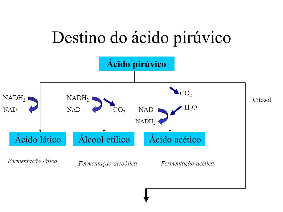 Destino do ácido pirúvico