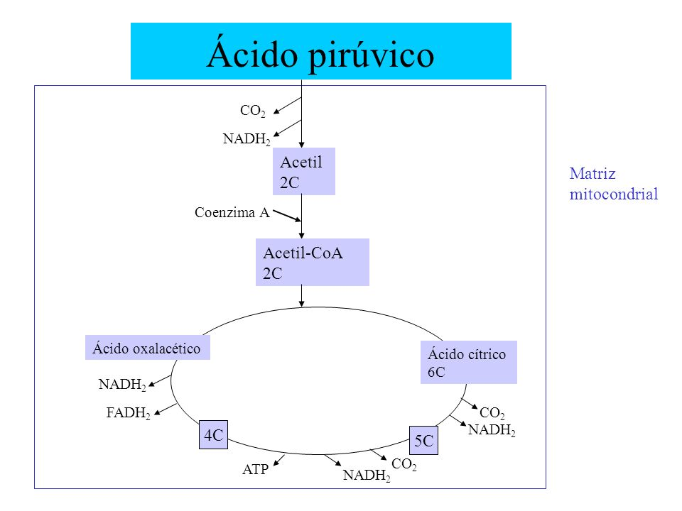 Ácido pirúvico Acetil 2C Matriz mitocondrial Acetil-CoA 2C 4C 5C CO2