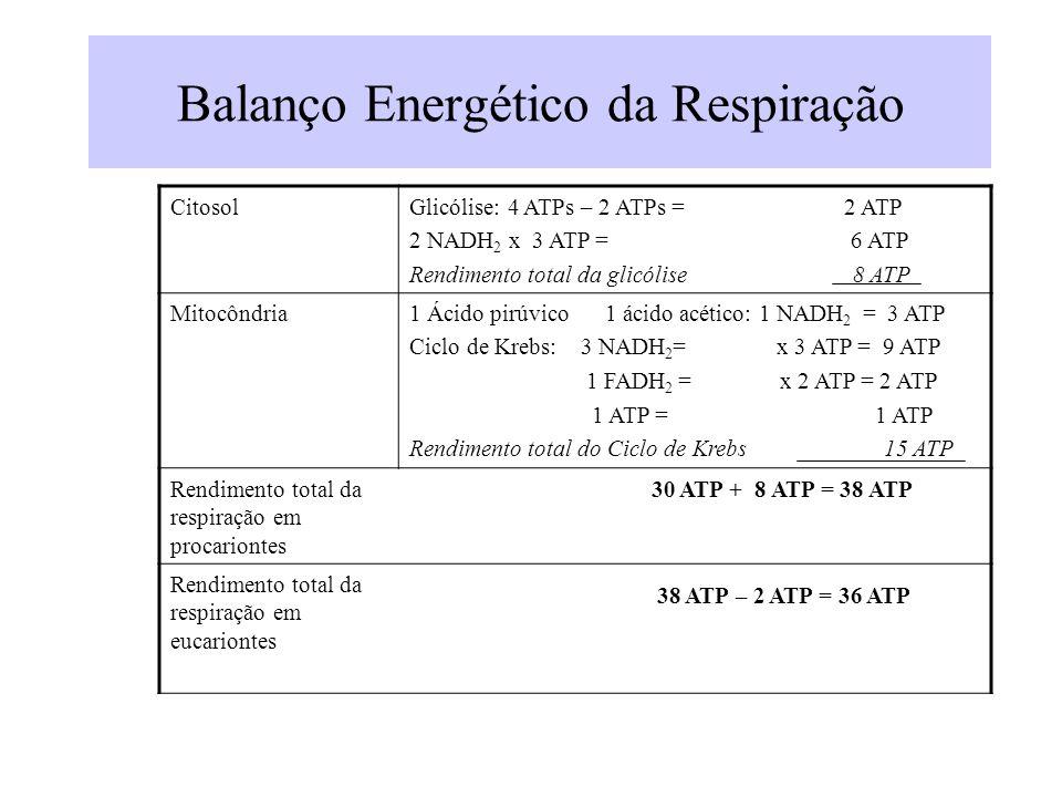Balanço Energético da Respiração