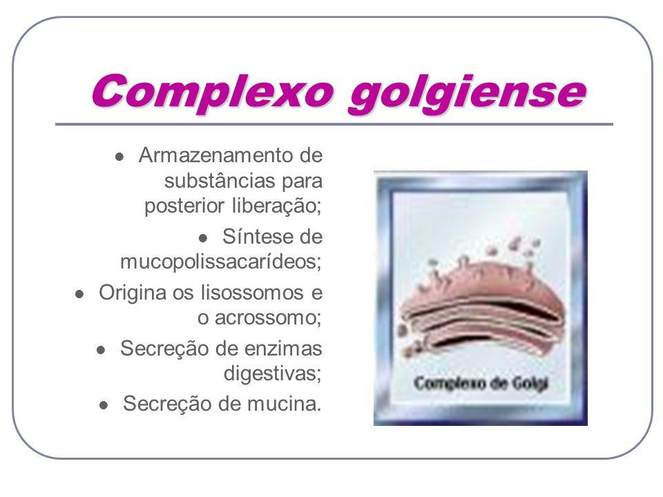 Complexo golgiense Armazenamento de substâncias para posterior liberação; Síntese de mucopolissacarídeos;