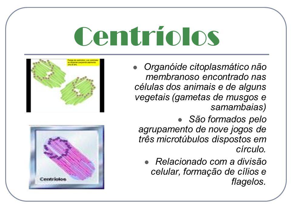 CentríolosOrganóide citoplasmático não membranoso encontrado nas células dos animais e de alguns vegetais (gametas de musgos e samambaias)