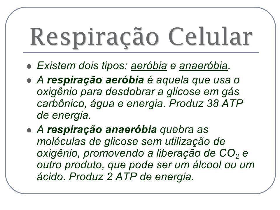 Respiração Celular Existem dois tipos: aeróbia e anaeróbia.