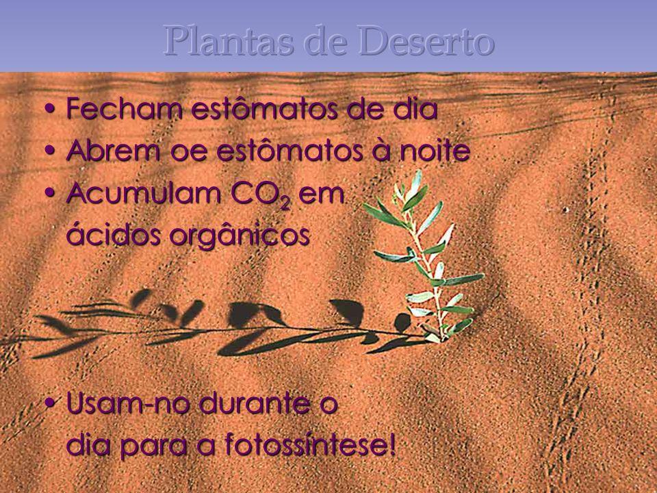Plantas de Deserto Fecham estômatos de dia Abrem oe estômatos à noite