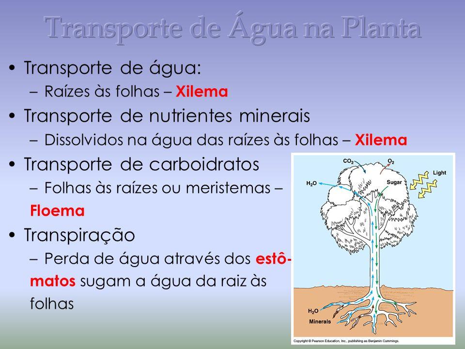 Transporte de Água na Planta