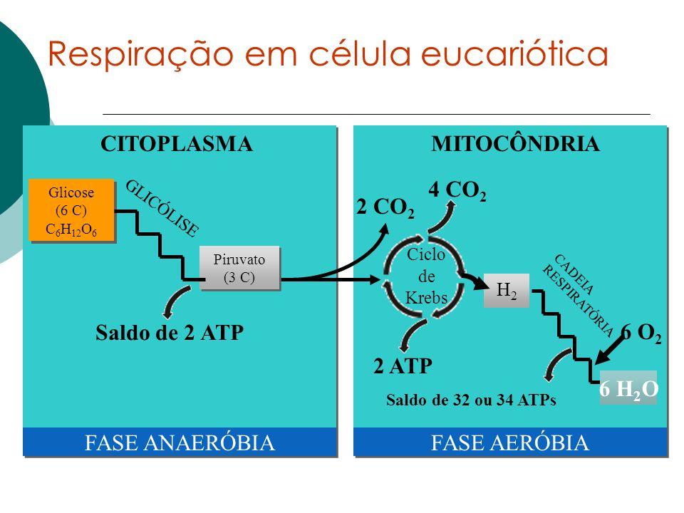 Respiração em célula eucariótica