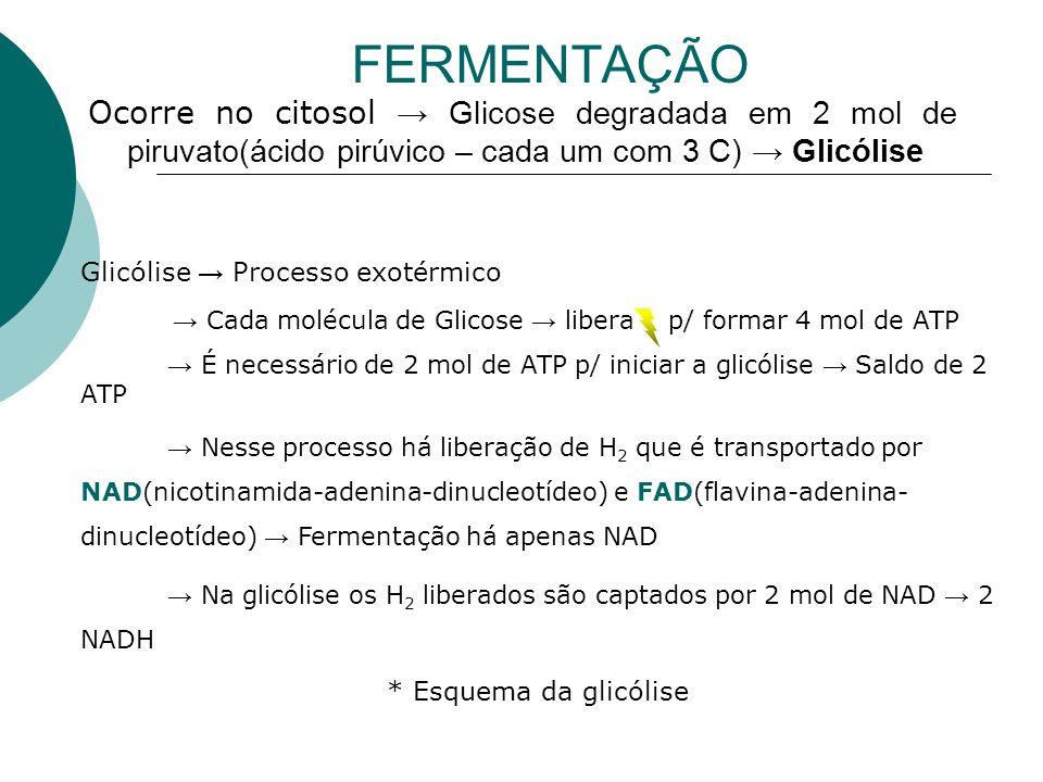 FERMENTAÇÃO Ocorre no citosol → Glicose degradada em 2 mol de piruvato(ácido pirúvico – cada um com 3 C) → Glicólise.