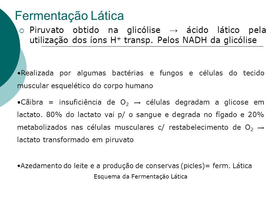 Esquema da Fermentação Lática
