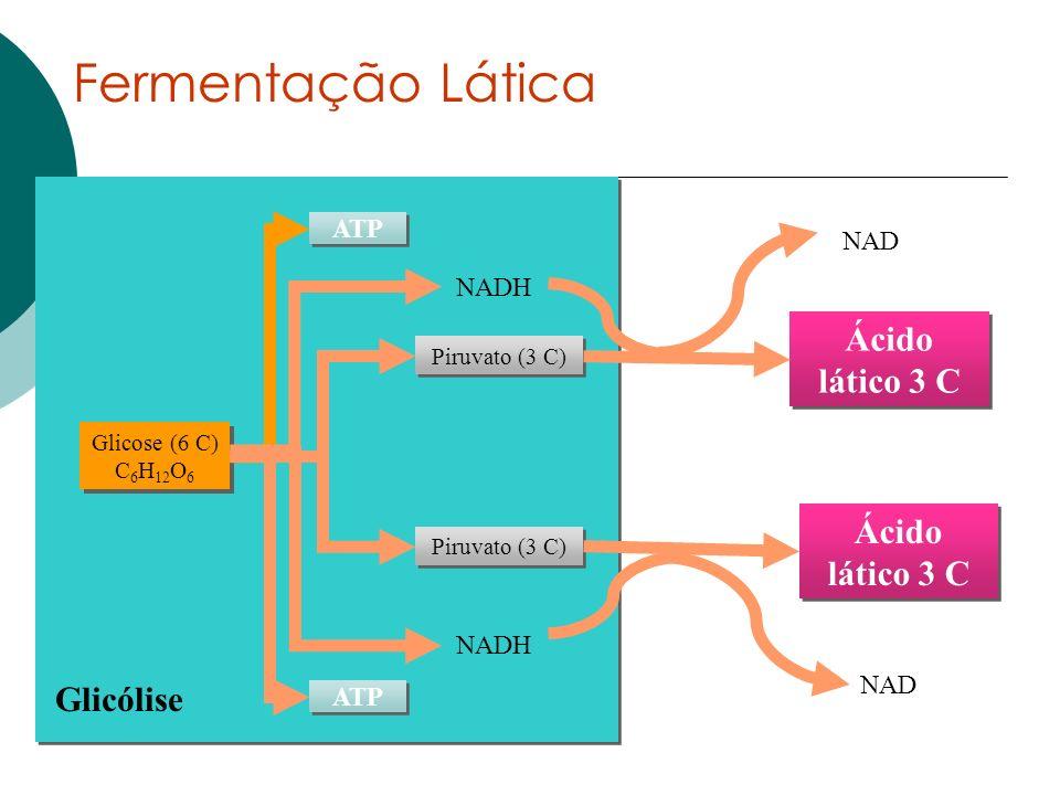 Fermentação Lática Ácido lático 3 C Glicólise NADH NAD ATP