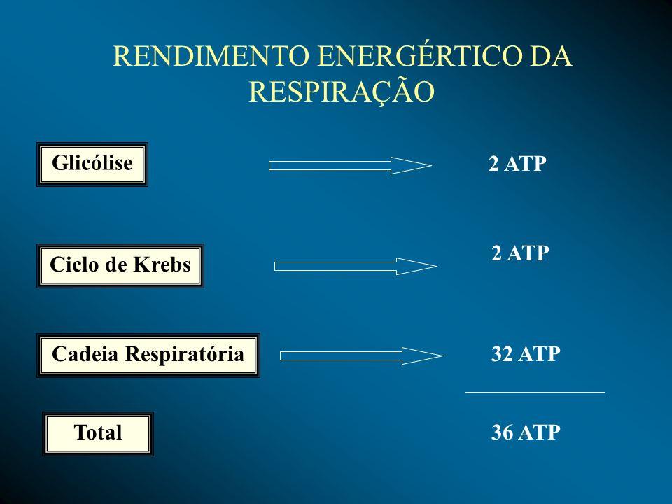 RENDIMENTO ENERGÉRTICO DA RESPIRAÇÃO