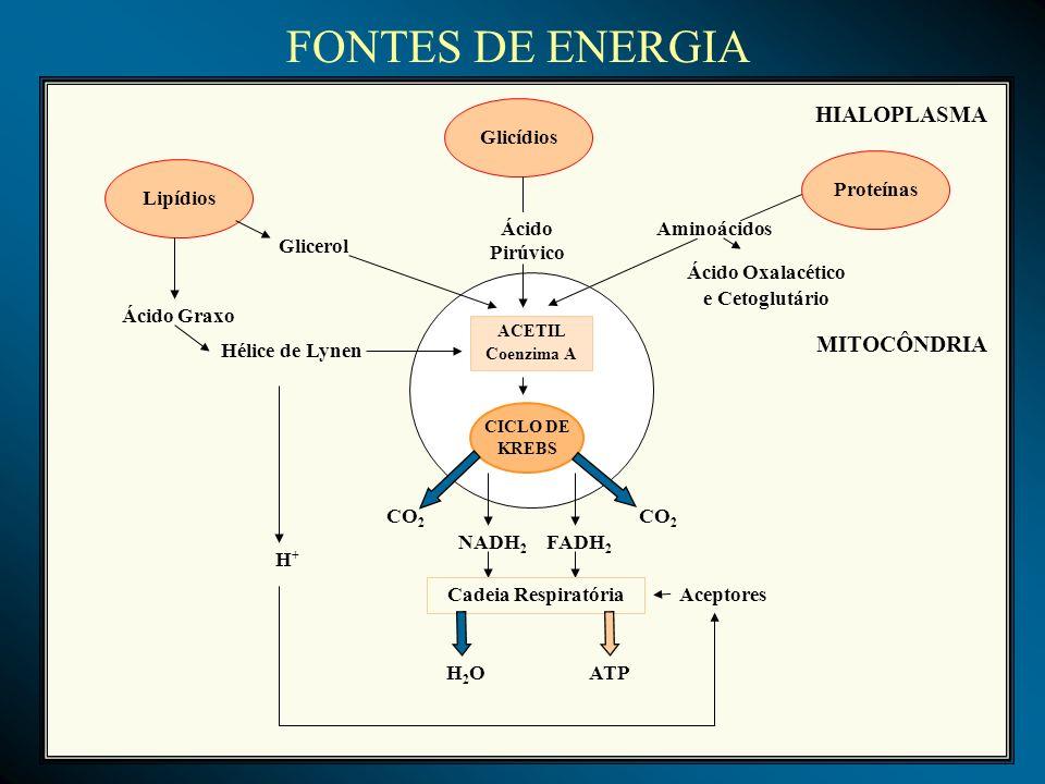 FONTES DE ENERGIA HIALOPLASMA MITOCÔNDRIA Glicídios Proteínas Lipídios
