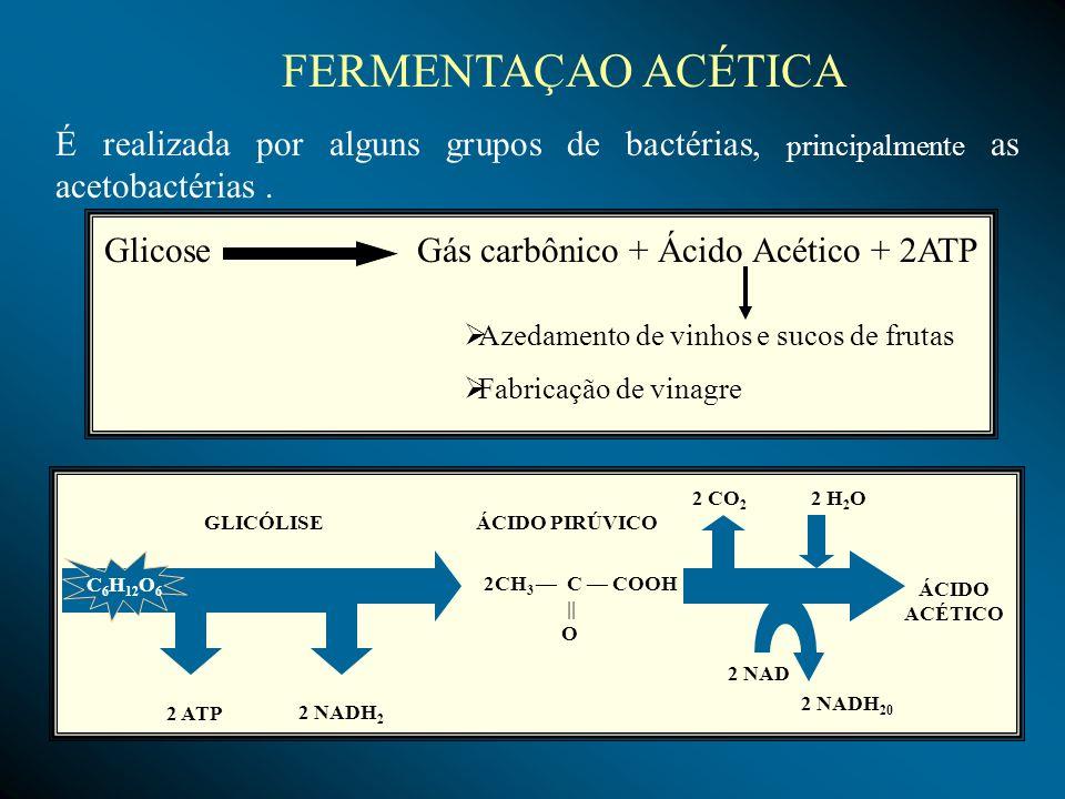 Glicose Gás carbônico + Ácido Acético + 2ATP