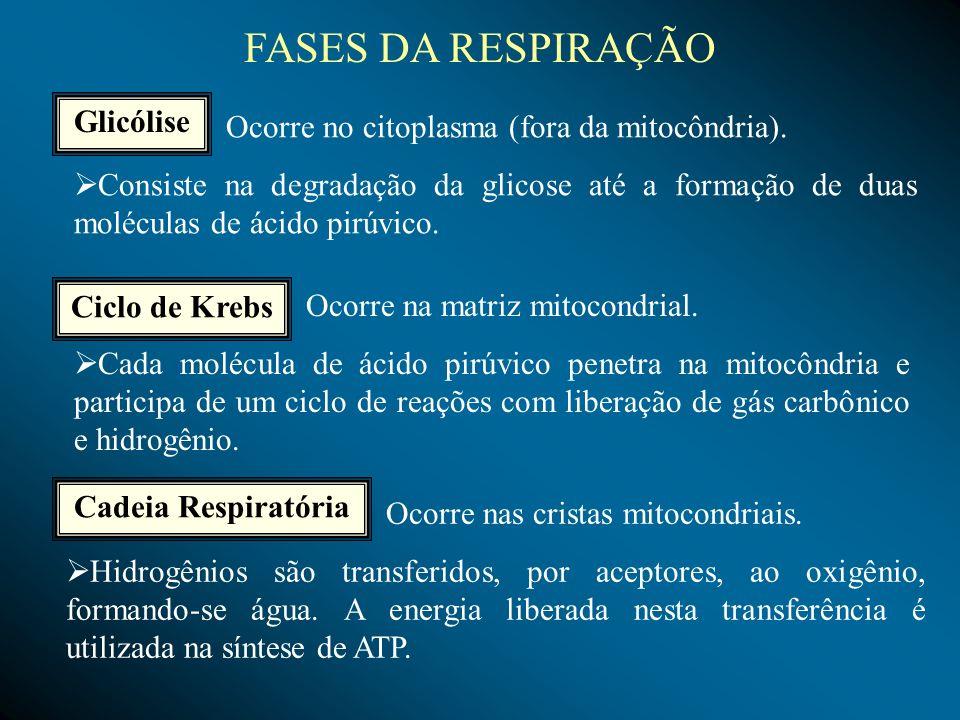 FASES DA RESPIRAÇÃO Glicólise