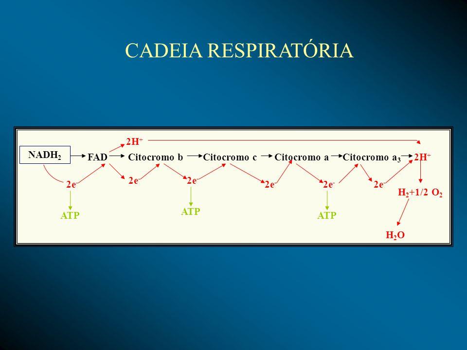 CADEIA RESPIRATÓRIA 2H+ NADH2 FAD Citocromo b Citocromo c Citocromo a