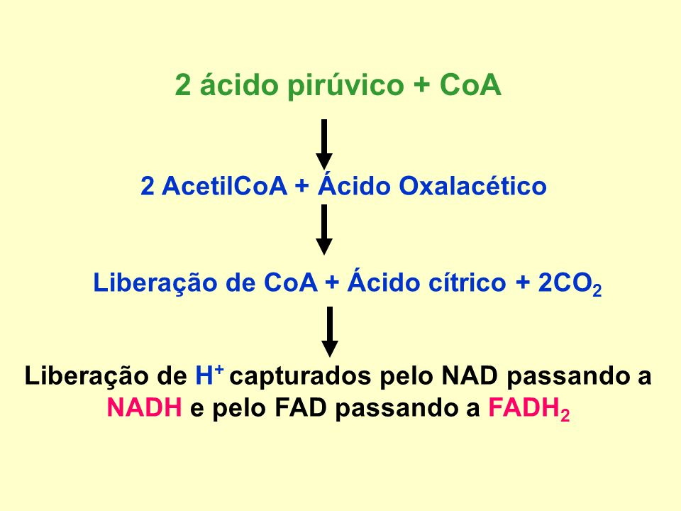 2 ácido pirúvico + CoA 2 AcetilCoA + Ácido Oxalacético