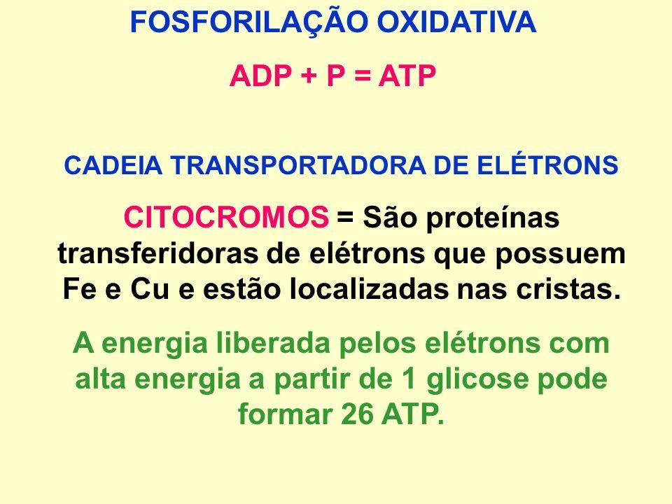 FOSFORILAÇÃO OXIDATIVA CADEIA TRANSPORTADORA DE ELÉTRONS