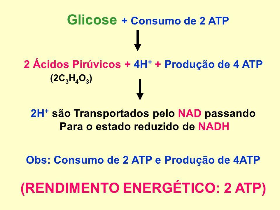 (RENDIMENTO ENERGÉTICO: 2 ATP)