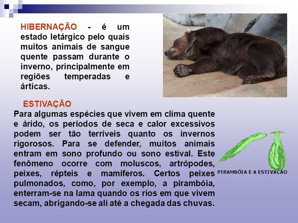 HIBERNAÇÃO - é um estado letárgico pelo quais muitos animais de sangue quente passam durante o inverno, principalmente em regiões temperadas e árticas.