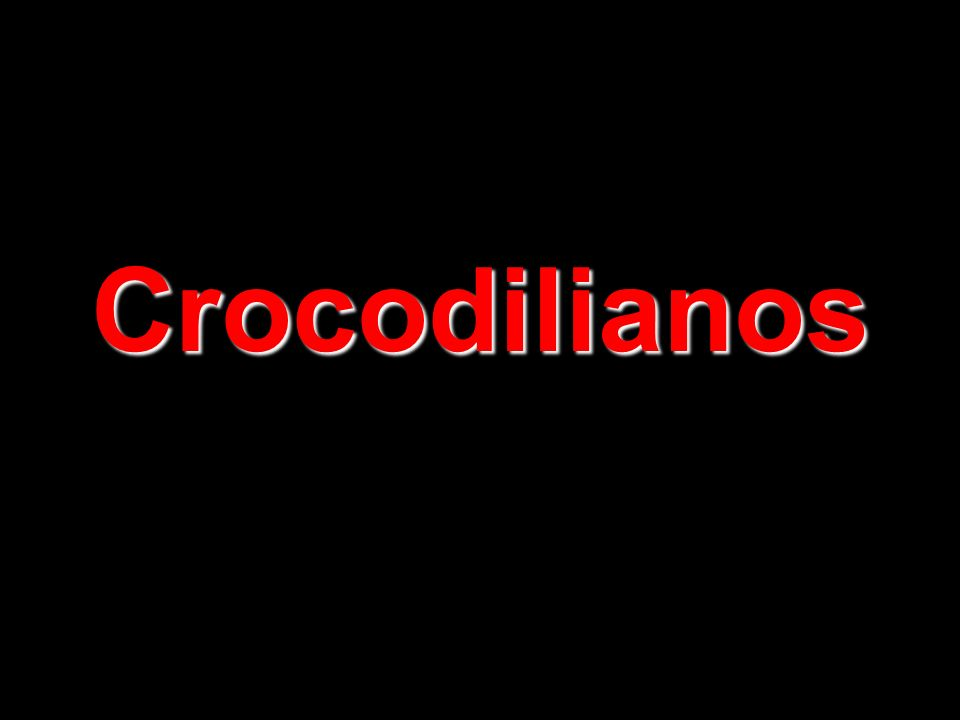 Crocodilianos